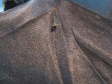 lalat pun suka estrella nuff said